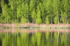 Free Tree And Water Royalty Free Stock Images - 5239279
