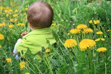 Free Child With The Dandelion Stock Image - 5239741