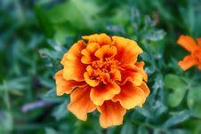 Yellow Orange Flower Stock Photos