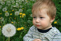 Free Child With The Dandelion Royalty Free Stock Photo - 5240325