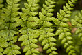 Free Fern Leaf Detail Stock Photo - 5242100