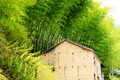 Free Old House Among Bamboo Stock Photos - 5247213