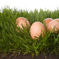 Free Fresh Eggs In Grass Royalty Free Stock Photography - 5247457