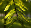 Free Leaves Royalty Free Stock Image - 5248856