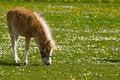 Free Horse Eating Stock Photo - 5248920