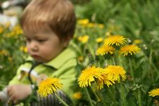 Free Child With The Dandelion Stock Images - 5240094
