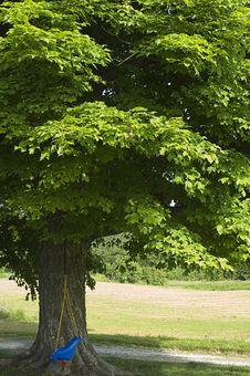 Free Tree Swing Stock Image - 5240171