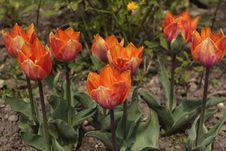 Free Orange Flowers Stock Photos - 5241443