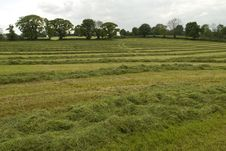 Free Harvest Of Grass Stock Images - 5241584