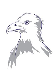 Free Eagles Head Stock Images - 5242624