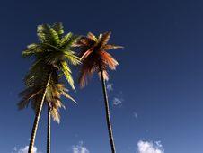 Free Wild Palms 43 Royalty Free Stock Photo - 5242865