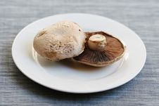 Free Mushrooms Stock Photo - 5243710