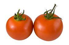 Tomato5 Royalty Free Stock Image