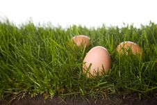 Fresh Eggs In Grass Stock Photo