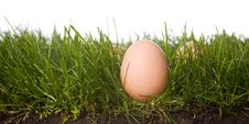 Fresh Eggs In Grass Royalty Free Stock Image