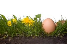 Fresh Eggs In Grass Stock Photography