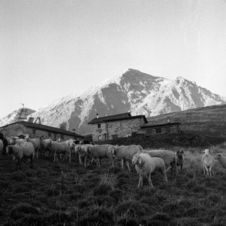 Free Sheeps In Mountain Royalty Free Stock Images - 5245569