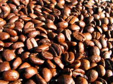 Free Coffee-beans Royalty Free Stock Image - 5245966