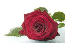 Free Red Rose. Royalty Free Stock Photos - 5246678