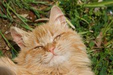 Free Orange Cat Royalty Free Stock Photo - 5246995