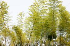 Free Bamboo Stock Photo - 5247130