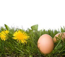 Fresh Eggs In Grass Royalty Free Stock Photography