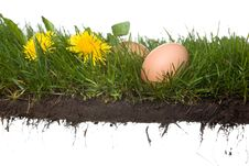 Fresh Eggs In Grass Royalty Free Stock Photo
