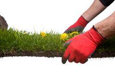 Free Gardening Royalty Free Stock Photos - 5247518