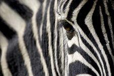 Free Zebra Eye Royalty Free Stock Image - 5247796