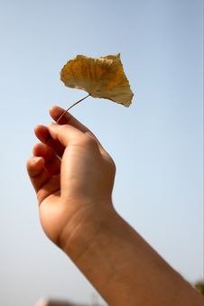 Free Hand And Leaf Royalty Free Stock Image - 5248846