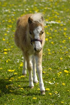 Free Foal Royalty Free Stock Photos - 5248968