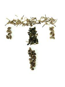 Free Green Tea Letter Stock Image - 5249811