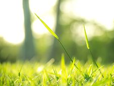 The Shinig Grass Under The Sunlight Stock Photos
