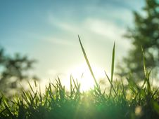 Free The Grass Under The Morning Sunlight Royalty Free Stock Photo - 52424435