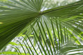Free Abstract Palm Stock Images - 5252494