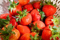 Free Strawberries2 Royalty Free Stock Image - 5255436