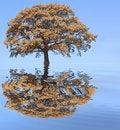 Free Autumn Flood Royalty Free Stock Photography - 5256427