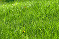 Free Green Grass 4 Royalty Free Stock Photo - 5256945