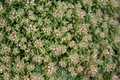 Free Garden Plant Royalty Free Stock Photo - 5257975