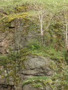 Free Hill Rock With Grass Trees And Moss Royalty Free Stock Photography - 5259437