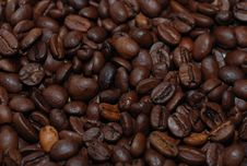 Free Coffee Beans Royalty Free Stock Images - 5250349