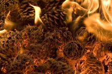 Free Burning Pinecones. Stock Image - 5251701