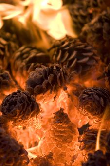 Free Pinecones In A Fire. Stock Photo - 5251710