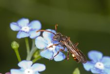 Free Insect On Flower Royalty Free Stock Photos - 5252638