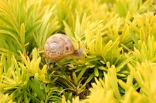 Snail And Water Drops Royalty Free Stock Images