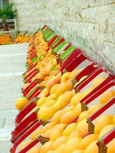 Free Many Oranges Royalty Free Stock Image - 5253726