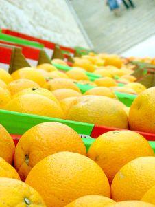 Free Many Oranges Royalty Free Stock Photo - 5253775
