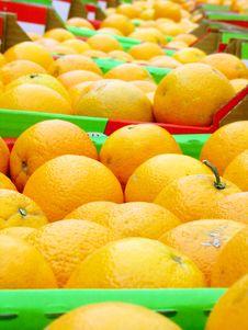 Free Many Oranges Royalty Free Stock Photography - 5253857