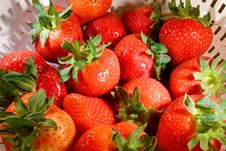 Free Strawberries2 Royalty Free Stock Image - 5255436