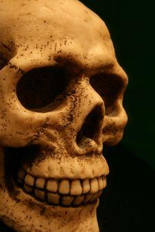 Free Skull Isolated Stock Photos - 5255763